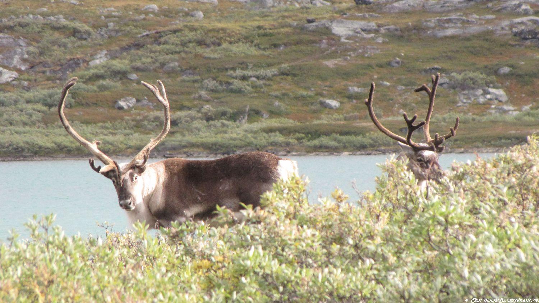 Kungsleden – Lappland – Tour im Sarek